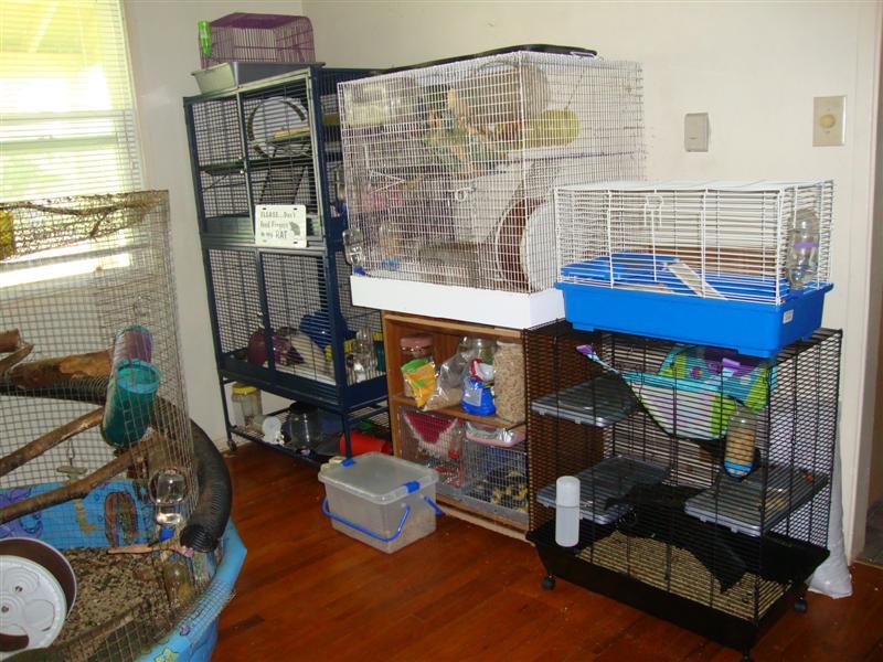 best bedding for rats 28 images fleece bedding the rat. Black Bedroom Furniture Sets. Home Design Ideas